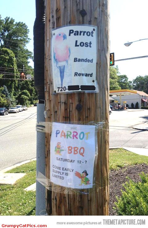 The-Lost-And-Found-Parrot-Very-Funny-Signs-On-The-Wall-Picture