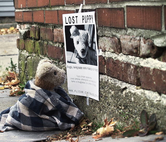 lost missing found puppy dog