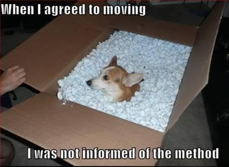 moving fail 6